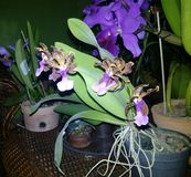 Orchides. A variety of flowers Royalty Free Stock Photography