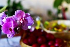 Orchidia per Pasqua Fotografia Stock Libera da Diritti