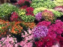 orchids αγοράς της Hong λουλουδιών kok kong mong Στοκ εικόνες με δικαίωμα ελεύθερης χρήσης
