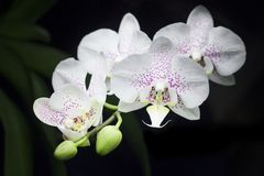 orchids απεικόνισης σύνθεσης ανθοδεσμών θερινό διάνυσμα στοκ εικόνες