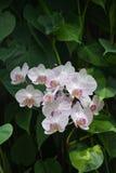 orchids απεικόνισης σύνθεσης ανθοδεσμών θερινό διάνυσμα Στοκ φωτογραφίες με δικαίωμα ελεύθερης χρήσης