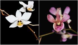 orchids κολάζ Στοκ εικόνα με δικαίωμα ελεύθερης χρήσης
