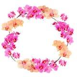 orchids πλαισίων οδοντώνουν κίτ&r Στοκ Εικόνες