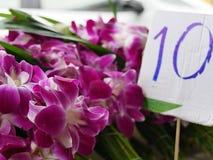 orchids πορφύρα Στοκ Εικόνα