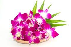 orchids πορφύρα Στοκ φωτογραφίες με δικαίωμα ελεύθερης χρήσης