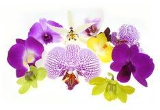 orchids Royaltyfri Foto