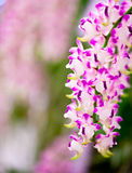 Orchids. White purple Orchids for background Stock Photos