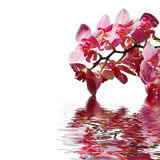 Orchids. Orchid in the water on a sunny day Royalty Free Stock Image