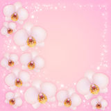 Orchids. On a pink background with patches of light Stock Images
