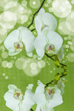 Orchids. With water reflections and bubbles Royalty Free Stock Photo