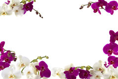 Orchids. Fresh orchid border with white and pink orchids