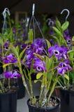 orchids Fotografia Stock Libera da Diritti