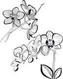 orchids Arkivbild