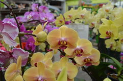 orchids Fotos de Stock