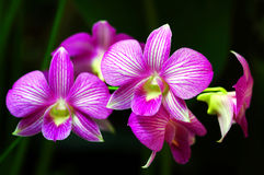 Orchids stock images
