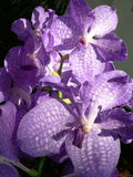 Orchids. A close up of orchids royalty free stock photography