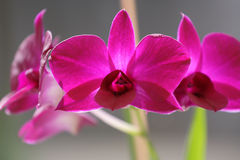 Orchids. Four orchid, backlit by the sun royalty free stock photography