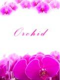 orchids Imagem de Stock Royalty Free