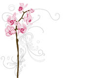 Orchids. Illustration of orchids and decorative patterns Stock Photo