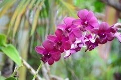 orchids Στοκ Φωτογραφίες