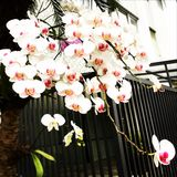 orchids Immagine Stock