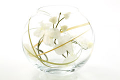 Orchids. In vase on white background royalty free stock images