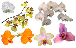 Orchids. Set of colourful Orchid flowers Stock Photo
