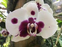 orchids Fotografia de Stock Royalty Free