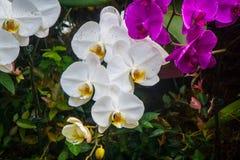 orchids Στοκ φωτογραφίες με δικαίωμα ελεύθερης χρήσης