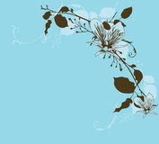 Orchids. Illustration of orchids and decorative patterns Stock Images