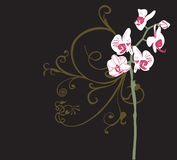 Orchids. Illustration of orchids and decorative patterns Stock Photos