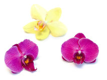 orchids Royaltyfria Bilder
