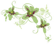 Orchids. Illustration of orchids and decorative patterns Royalty Free Stock Photo