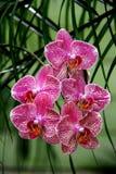 Orchids4 lizenzfreie stockfotos