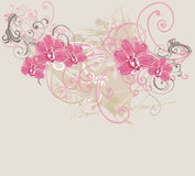 Orchids. Illustration of orchids on a grungy background Royalty Free Stock Photo