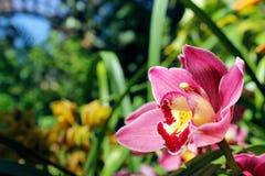 orchids Fotos de Stock