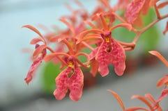 orchids Arkivfoton
