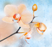 Orchids on abstract background Stock Image