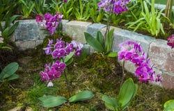 Orchids. In arboretum Volcji potok, Kamnik, Slovenia Stock Photography