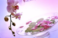 Orchids aromatherapy. Petails in the water with pink orchid Stock Image
