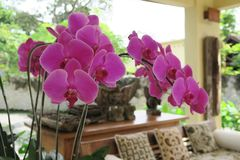 Orchids in asian hotel lobby Royalty Free Stock Photo