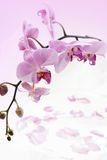 Orchids background Stock Photo