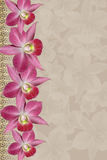 Orchids background Stock Images