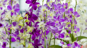 Orchids on background. Stock Images