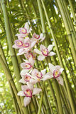 Orchids and Bamboo Stalks. Close-up low angle view of pink orchids and green stalks of bamboo. Vertical shot Royalty Free Stock Image