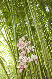 Orchids and Bamboo Stalks Stock Photo