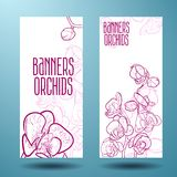 Orchids on the banner for design Royalty Free Stock Images