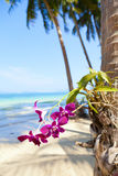 Orchids on the Beach Royalty Free Stock Photography