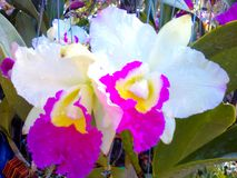 Orchids. Beautiful flowers drought-resistant home decor & garden Stock Images