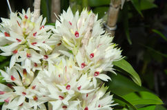 Orchids. The beauty of orchids in Thailand Stock Images